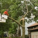 Arborist in Advance, North Carolina